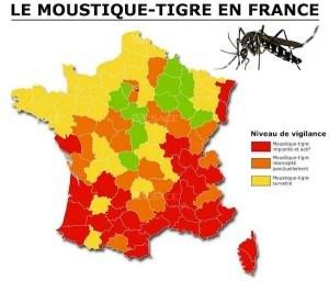 moustique-tigre-france